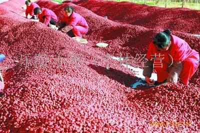 新疆若羌红枣厂家