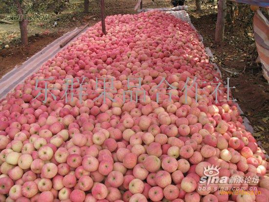 红富士苹果批发价格