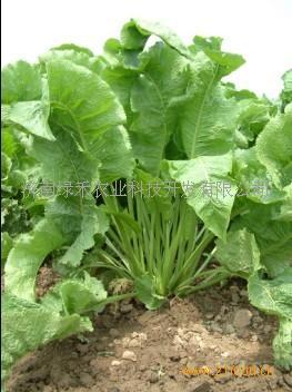 背景 壁纸 绿色 绿叶 蔬菜 树叶 植物 桌面 263_352 竖版 竖屏 手机