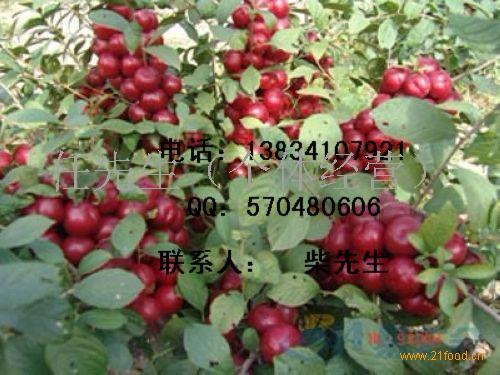 经济果树类:1---15公分山楂树,1-15公分核桃树,1---10公分苹果树,1