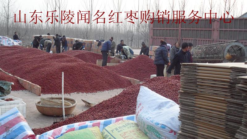 处理优质乐陵红枣3000吨