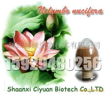 产品展厅:  产品名称: 荷叶提取物 原产地: 中国  西安 产品