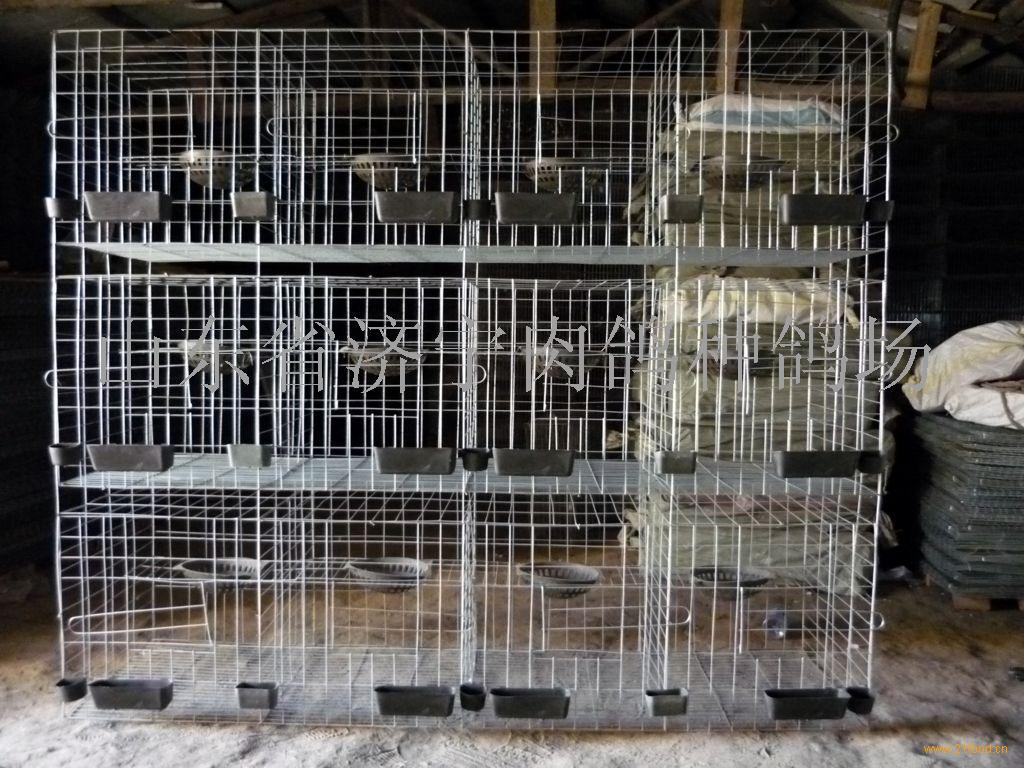 肉鸽养殖笼商家 肉鸽养殖笼价格 鼎好食品网图片