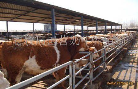 山西省肉牛养殖_肉牛养殖基地_山西__牛-食品商务网