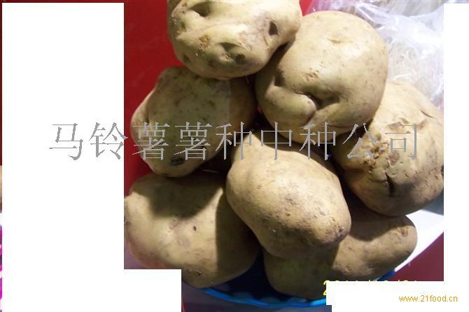 冀张薯8号土豆种子大白花2191