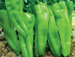 产品展示 > 绿色蔬菜   原产地: 中国 产品品牌名称: 悦天然 产品说明