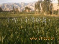 培育农作物种子