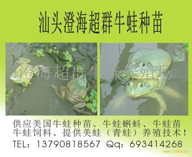 美蛙蝌蚪苗(一级)