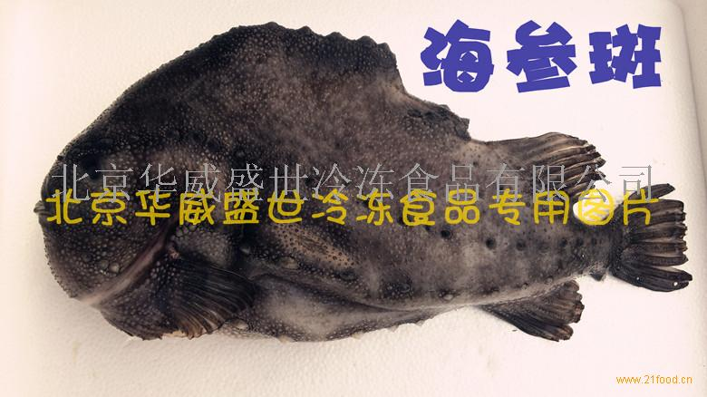 海参斑(浪浦斯鱼)属于圆鳍鱼科海鱼。肉食性鱼类,体短粗,产于北极和北大西洋两岸的冰山区域。生活在海底200米深处,没有任何污染,自然环境保持原生态。海参斑纯系自然野生,属稀有的深海冷水鱼种。鱼肉色雪白,甘香肥美,口感滑嫩,鱼骨软,含钙量高,鱼皮软硬适中,宛若海参。海参斑含有丰富的不饱和脂肪酸OMEGA-3可以降低胆固醇,有助于防止癌症,溃疡性结肠炎及关节炎,是深海鱼油主要原料。我公司首次将海参斑成功引进中国市场,现该产品已成为进口优质海产品最受欢迎的品种之一