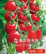 千禧番茄种子