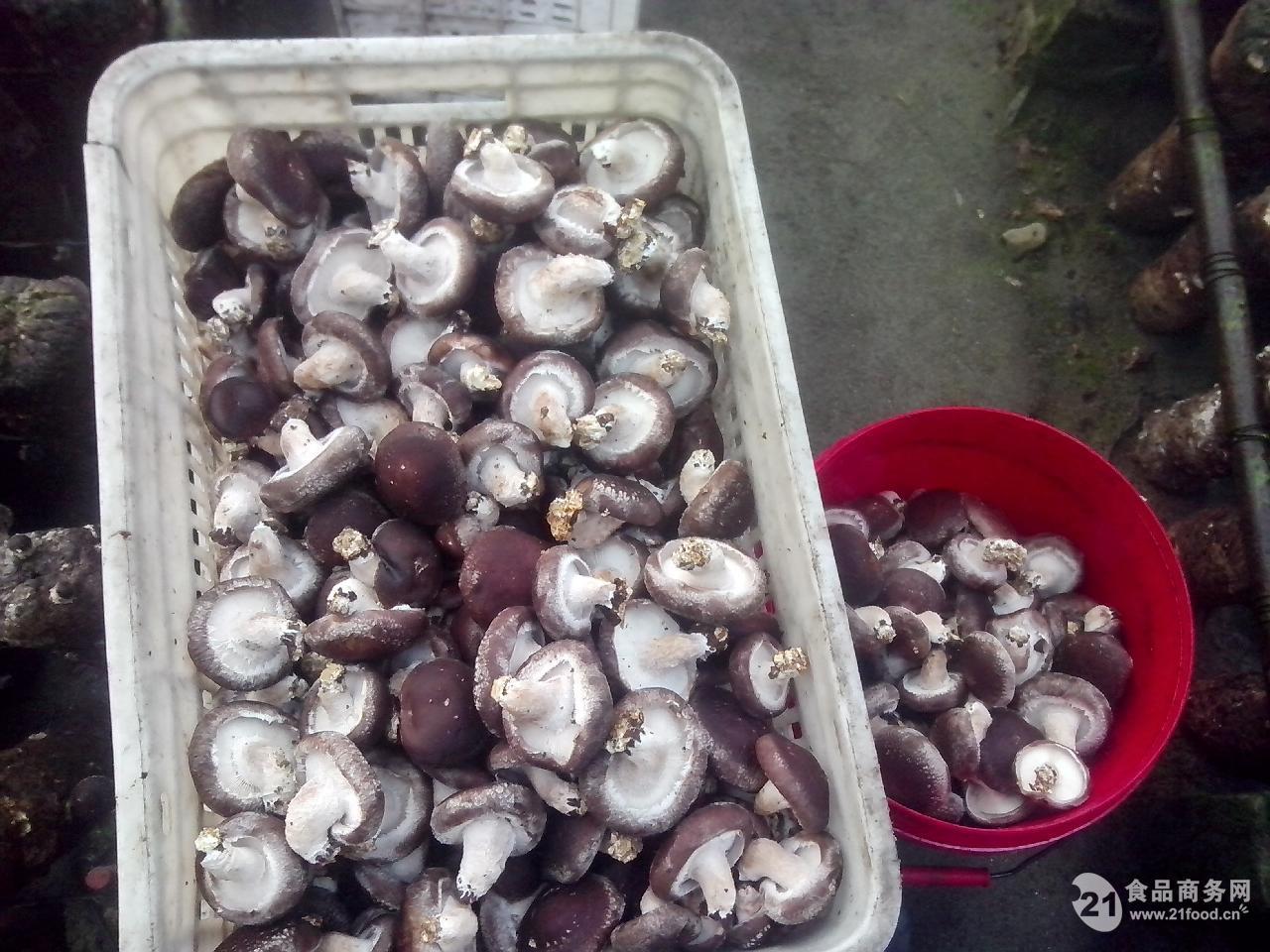 香菇棒种植步骤图片