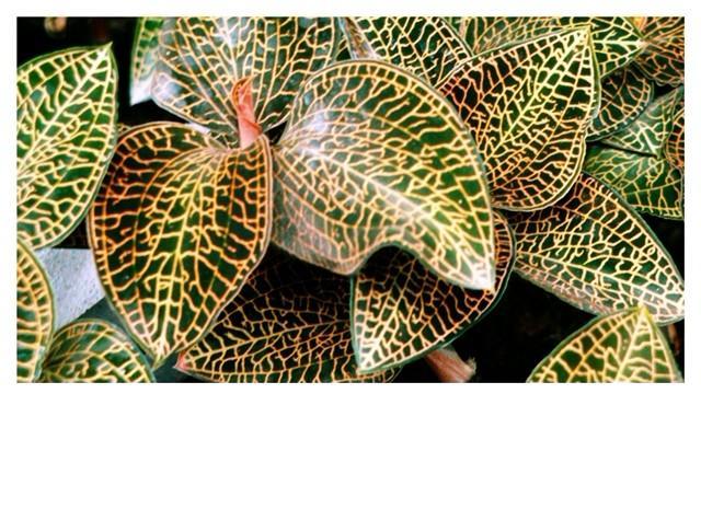 福建省金草生物集团有限公司是从事濒危珍稀名贵药用植物福建金线莲顶极母种诱导、组培种苗、生态林下种植、养生保健产品研发、生产和草之典原生金线莲品牌推广的生物科技健康产业集团。 集团率先成功攻克了规模化、产业化种植金线莲的技术难题,在福建金线莲道地原产地的国家级自然保护区内,设立了纯天然生态种植基地,开创了天然林下规模化种植新模式。集团旗下有三家全资子公司和一家控股子公司,是国内最大、最强的金线莲企业。 金草集团技术中心有专业的生物医药研发团队,是金线莲栽培规程的参与起草者及原生金线莲七原身份标准的制定者,