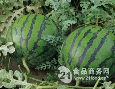 潍坊红玉西瓜