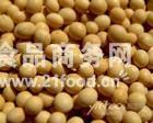 加拿大黄豆