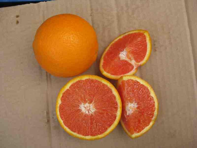 优质秭归红肉脐橙