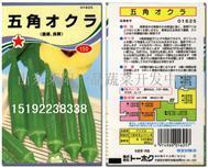 五角黄秋葵种子
