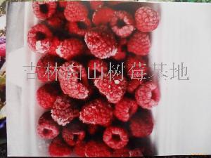供红树莓优质种苗