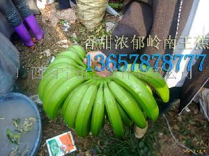 LNWB-12香蕉