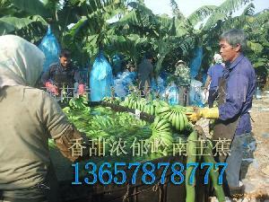 B23香蕉