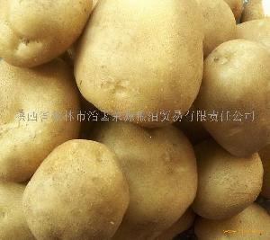 """""""晋薯8号"""""""