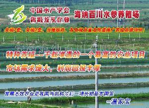 安徽水产特养基地养泥鳅。。。