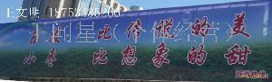 山东乐陵鲜枣