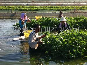 安徽肥西泥鳅养殖场专业提供泥鳅技术培训