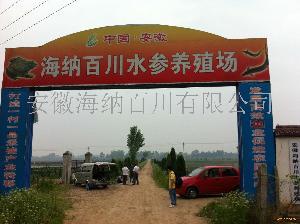 徽徽强8号泥鳅张任泥鳅养殖泥鳅养殖基地