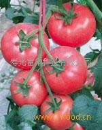 寿光蔬菜种苗宝粉298