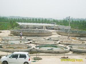 东北泥鳅鱼养殖场