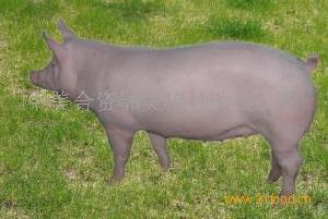 鄂美公司二元母猪
