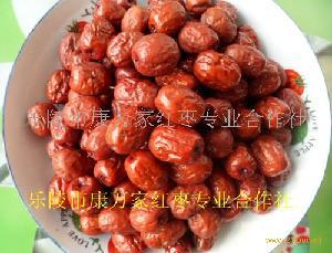 乐陵红枣 养生法宝