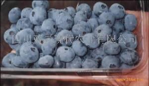 优质蓝莓鲜果