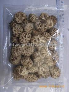 菌床白花菇