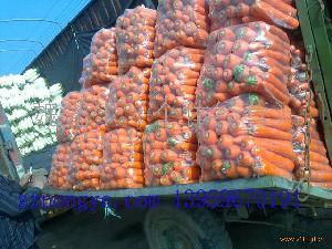 福建胡萝卜