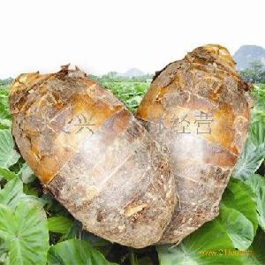 荔浦槟榔芋头