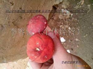 红蘑菇   2013新货上市