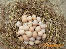 秦山土鸡蛋