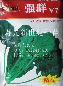 菠菜强群V7种子