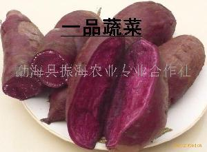 西双版纳紫红薯