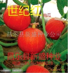 世纪红南瓜种子