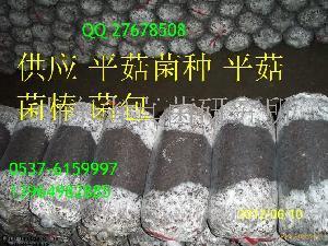 平菇菌种棒