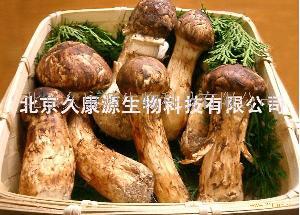 北京野生松茸