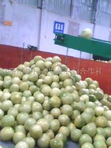 优质琯溪蜜柚