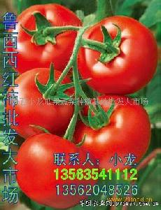 以色列大红果番茄