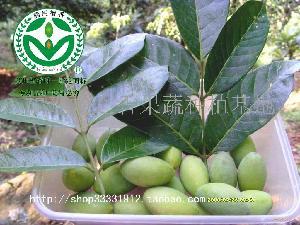 天然水果榄之香