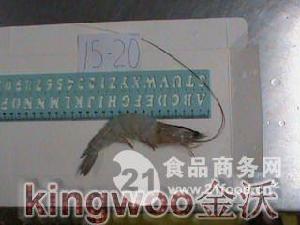 海捕捞虾 15-20
