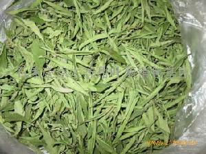 原生态甜叶菊