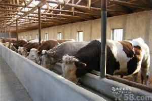 肉牛养殖利润