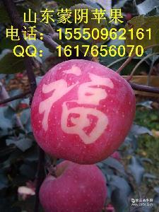 山东蒙阴苹果